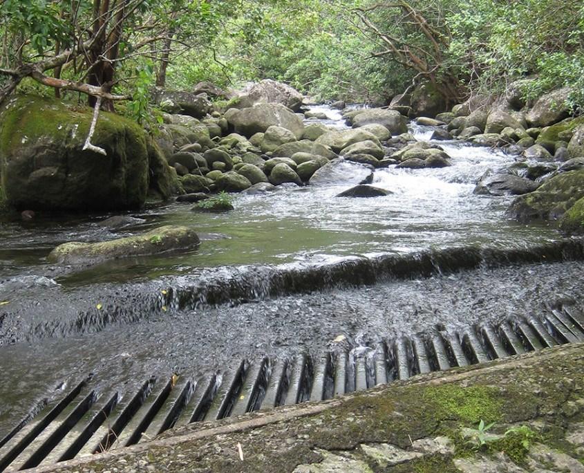 maui tomorrow stream flow