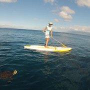 Maui Turtle TownCanoe Tour