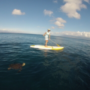 turtlesupkapaluawoman