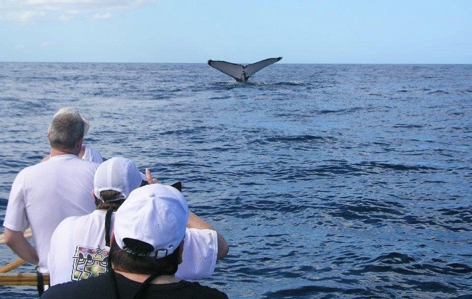Canoe Whale Watch