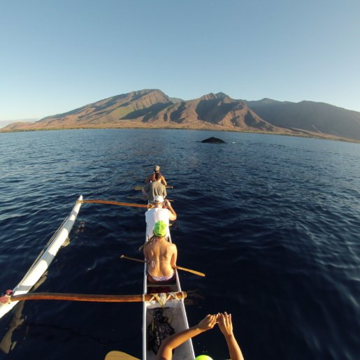Whale watching from Outrigger Canoe